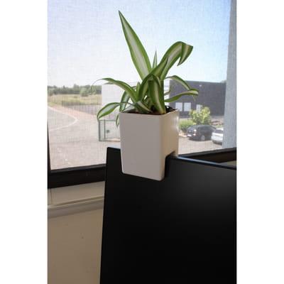 Plante dépolluante de bureau